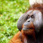 Conoce al Signos del Mono en el Horóscopo Chino