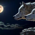 Conoce el Significado del Arcano La Luna