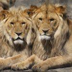 Conoce los Defectos de Leo y Aprende Cómo Tratarle